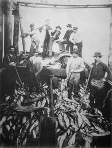 Scow load of Salmon, 1895